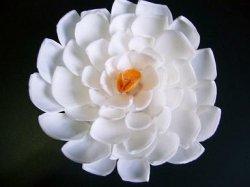 画像1: 白い花(E)
