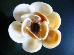 画像1: 茶色の花(A)
