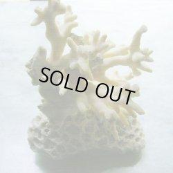 画像4: 珊瑚オブジェ