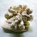 珊瑚オブジェ