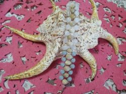 画像3: 数珠玉ブレスレット