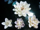 詳細Or別アングル画像2: 白い花(B)