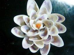 画像1: 紫の花(A)